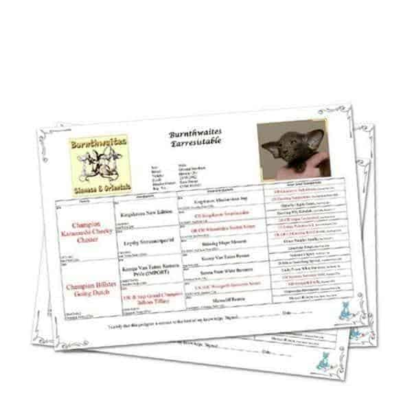 cat breeders services